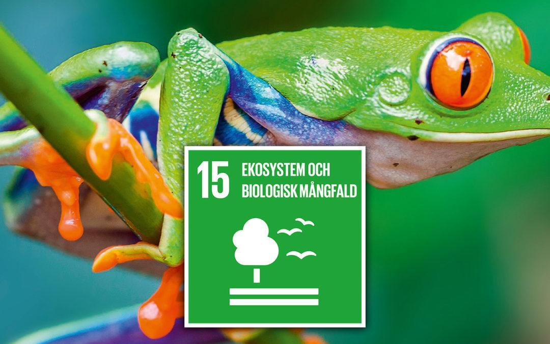 Ekosystem och biologisk mångfald (åk 2-4)