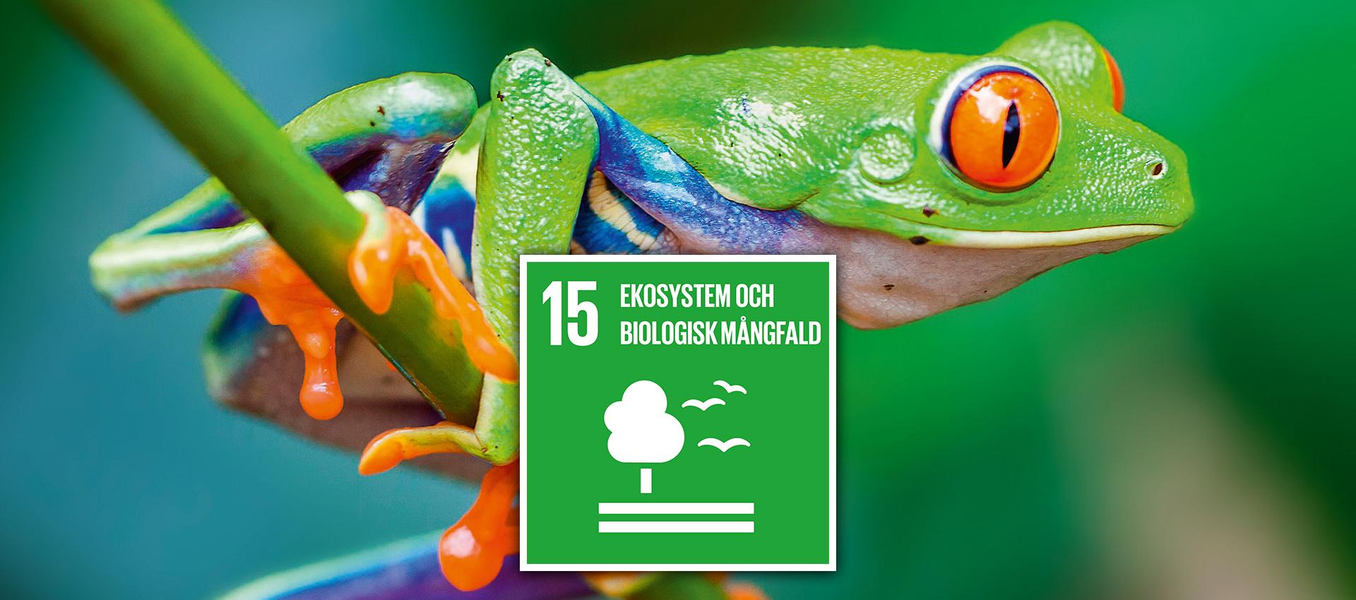 Globala målen 15 - Ekosystem och biologisk mångfald